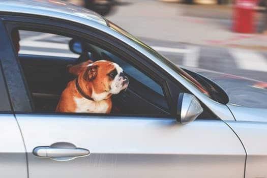 autobeveiligen.jpg